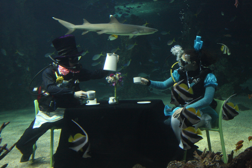 tea shark